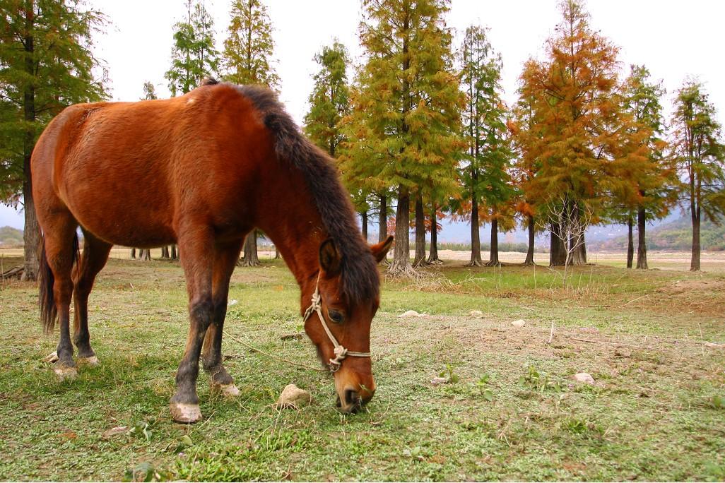 记得去年那个炎热的夏天,骄阳似火的太阳使劲地烤着大地,它想告诉大家:我是世界上最厉害的星球!我和爸爸妈妈去了包头的游乐园,我东张西望看见远处在一片被木板围住的空地上有一匹马在奔跑。马背上坐在一位叔叔,他手里拿着马鞭,在马的屁股上拍一下,马就跑得更快了。妈妈,我也想骑马。我向妈妈提出了我一直藏在心里的话,妈妈点头同意了。我激动地朝那位叔叔跑去,我一眼就相中了那匹白龙马。说是白龙马,其实是一匹浑身雪白的马。叔叔看见了我们,便跳下马背,牵着马朝我们大步流星地走来。叔叔解开拴着那匹马的绳子,让我骑上去。可是