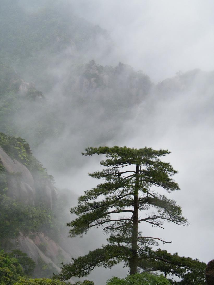 作品说明:  中国画一样的松树