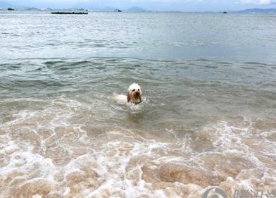 巽寮湾自驾游,大海、沙滩、美女!精彩作业