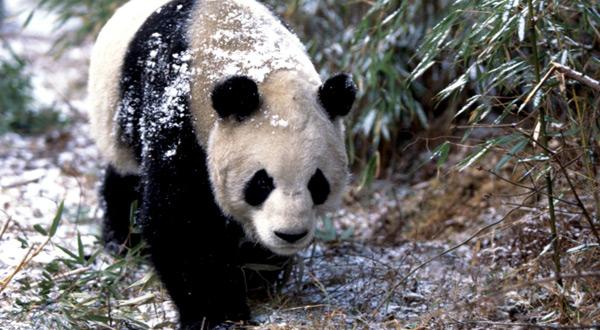 熊猫GM800手机网游下载_游戏狗手机版