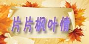 <片片枫叶情>
