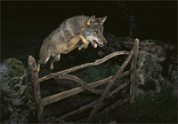 09年度威立雅环境野生动物摄影获奖作品
