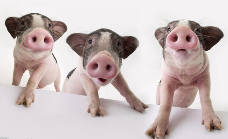 作为业务屠宰猪肉,中粮图纸(01610.hk)的大户跟随市场行情亦逐步恢复.肉食5小米图片
