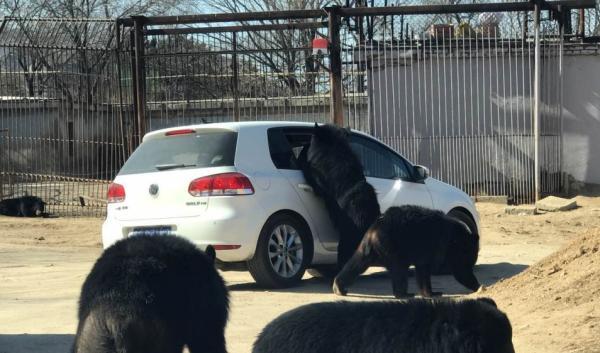 八达岭野生动物园自驾车遭黑熊围堵