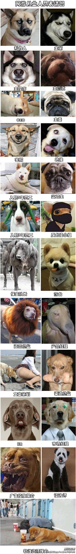 微博表情狗_doge微博表情原图_新浪微博表情大图_微博 ...