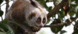 网护森林-高黎贡山保护行动