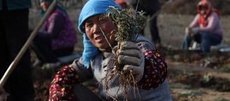 网添绿色-幸福家园生态扶贫全民行动