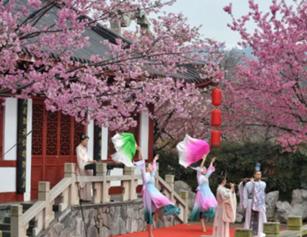 樱花怒放!武汉东湖樱园开园首日人气爆棚