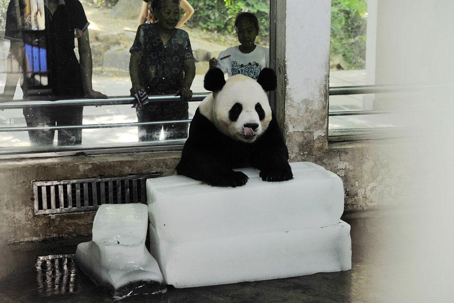 """走近武汉动物园""""熊猫人"""""""