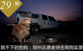 高清:郑州市犬只救助站志愿者突击救狗实录