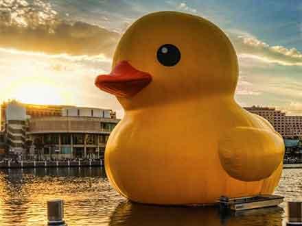风靡全球的大黄鸭空降少海湖?
