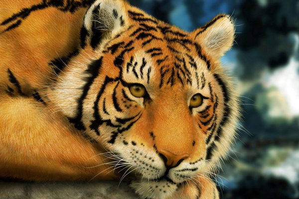 属虎人最好的微信头像